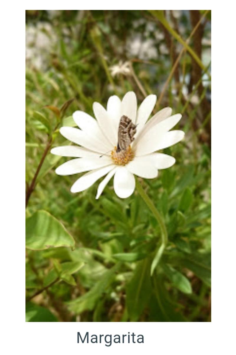 Para los aficionados a la fotografía, las flores, son el punto de mira en más de un objeto, gracias a su belleza natural.
