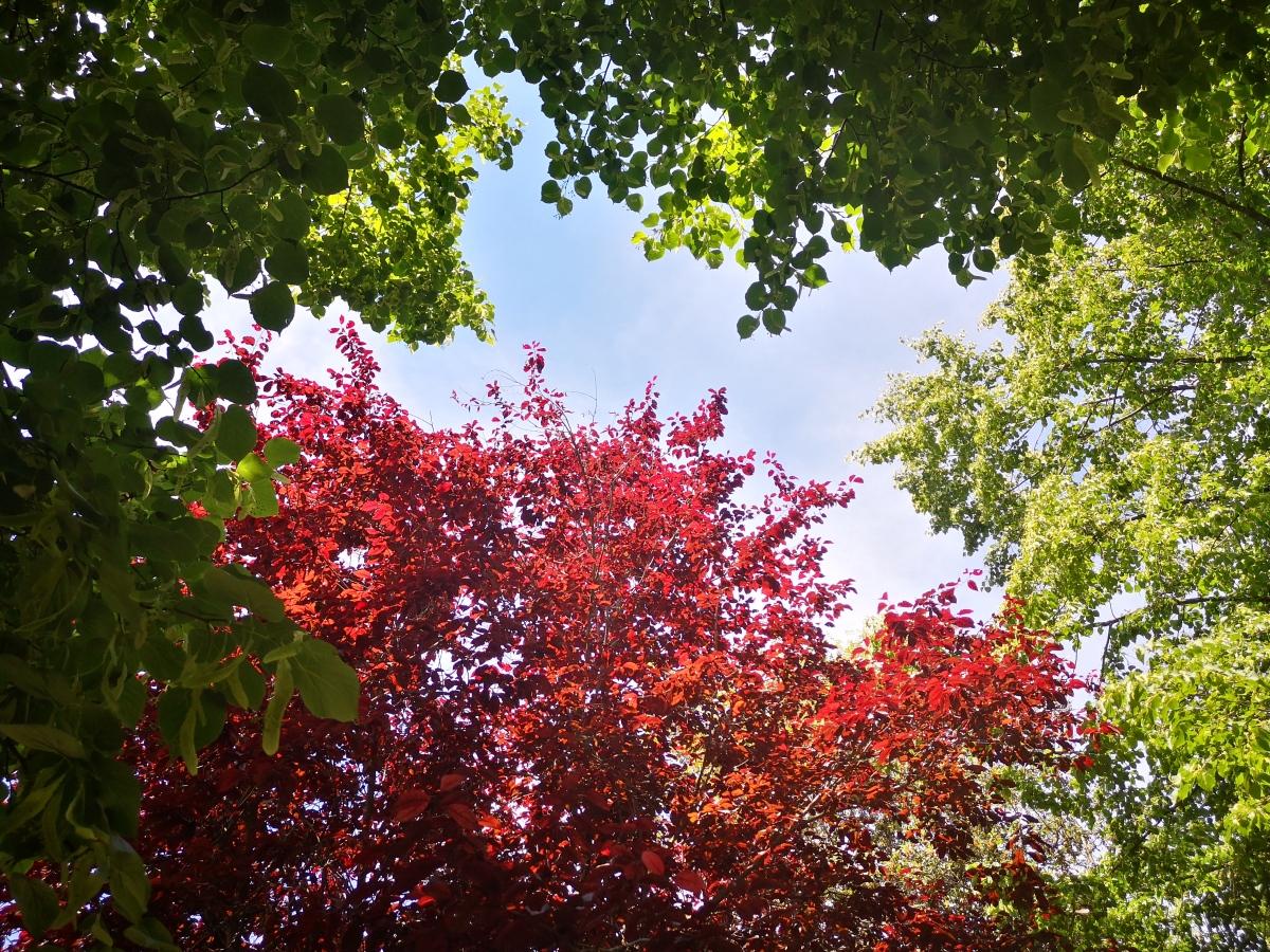 Los árboles son útiles paradecorar?